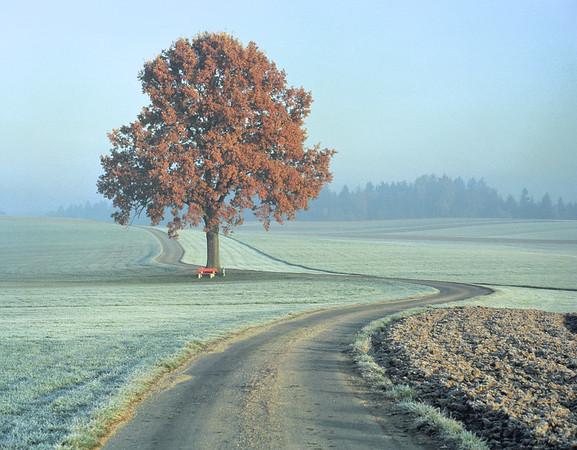 Country road and tree, autumn, morning --- Image by © Gerolf Kalt/Corbis
