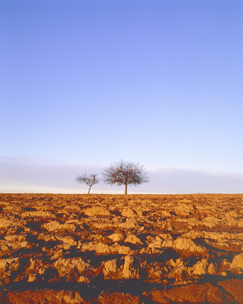 Plowed field with two apple trees in the autumn --- Image by © Herbert Kehrer/Corbis