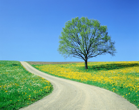 Country road and tree, spring --- Image by © Herbert Kehrer/Corbis