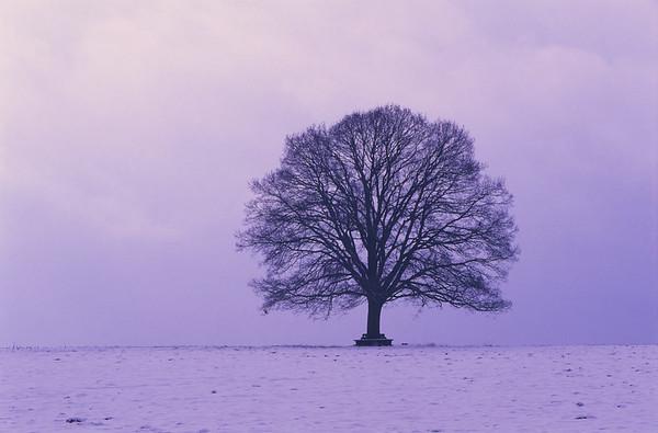 Oak tree, winter landscape, Germany --- Image by © Frank Lukasseck/Corbis