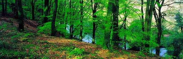 BT Forest panorama Nr. Waldpanoramen Buchenwald