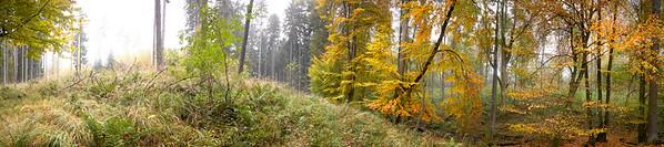 BT GIGA Waldpanorama Nr. Waldpanoramen Buchenwald