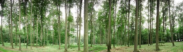 BT GIGA Waldpanorama Nr. Buchenwald Panorama