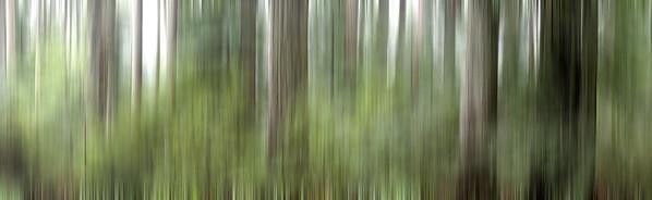 BT GIGA Waldpanorama Nr.