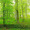 Schön Grün