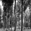 Buchenwaldpanorama