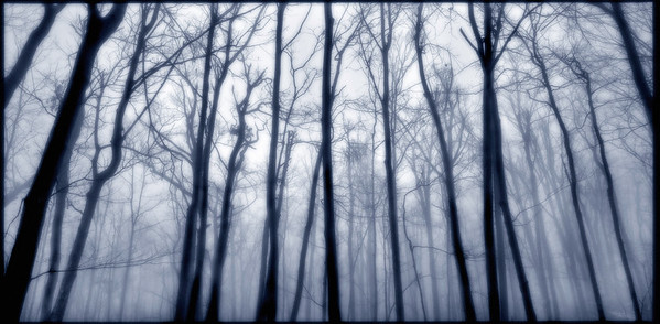 Forest and Fog --- Image by © Mark Tomalty/Masterfile/Corbis