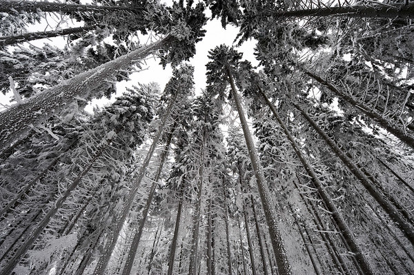 Austria --- Trees covered by snow and hoar frost, Austria. --- Image by © 145/Franz Aberham/Ocean/Corbis