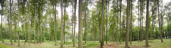 Buchenwald Panorama