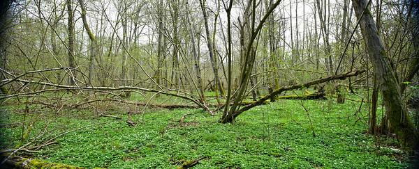 Sumpfgebiet Lichtenberg