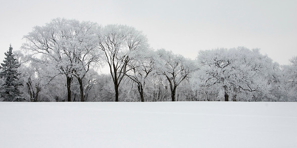 Snow covered trees and field --- Image by © Keith Levit/Design Pics/Corbis