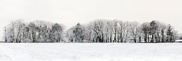 Devon, England, UK --- Line of Winter trees in the snow --- Image by © 145/Mike Hill/Ocean/Corbis