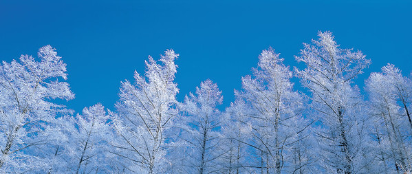Nature, Trees --- Image by © Masa-aki Horimachi/Aflo Relax/Corbis