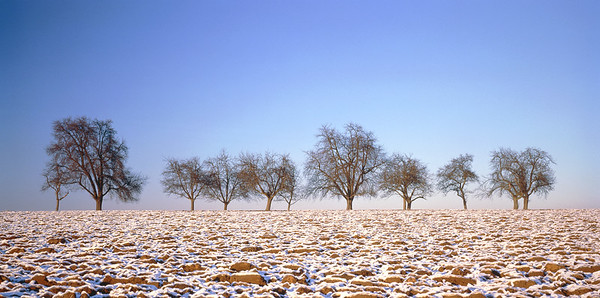 Apple trees and pear trees on a field in winter --- Image by © Herbert Kehrer/Corbis