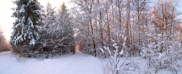 10 Dec 2012 --- Germany, View of snow covered forest --- Image by © Stillfactory/Westend61/Corbis
