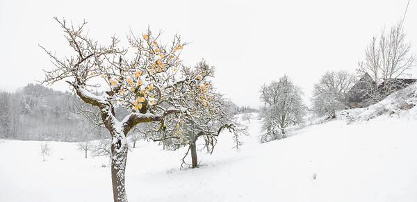 Baden-Württemberg, Germany --- Winter apple trees on snowy landscape --- Image by © Sven Hagolani/fstop/Corbis