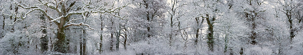 Sherborne, Dorset, England, UK --- Winter Landscape --- Image by © 145/Jeremy Walker/Ocean/Corbis