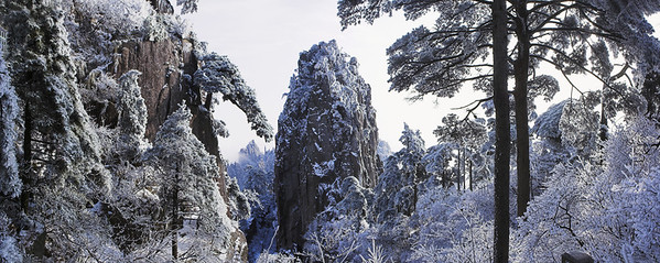 22 Jan 2006, Anhui Province, China --- Snow Covered Huangshan Pines --- Image by © Frank Lukasseck/Corbis