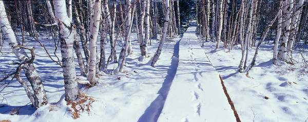 Footpath, pathway with  tracks in snow emphasizing concept of leaving, going away , Bohmer Wald, Czech  Republic