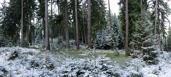 11 Jan 2013, Germany --- Forest in winter, Upper Palatinate, Bavaria, Germany, Europe --- Image by © David & Micha Sheldon/F1 Online/Corbis