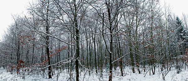 01 Feb 2013, Cologne, Rhineland, Germany --- Germany, Cologne View of forest trees in snow --- Image by © Stillfactory/Westend61/Corbis