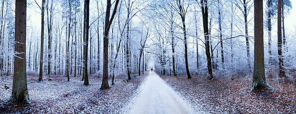 Eichstätt, Germany --- Panoramic view of a path leading through a forest covered in ice, Eichstaett, Bavaria, Germany, Europe --- Image by © Michael Rucker/imageBROKER/Corbis