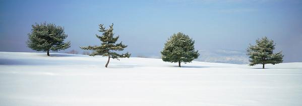 Four Trees in Winter --- Image by © Scott Barrow/Corbis