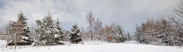 Northumberland, England, UK --- Snow-covered trees in the winter --- Image by © John Short/Design Pics/Corbis