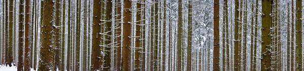 Saarburg, Rhineland, Germany --- Snow-covered forest in winter --- Image by © 2/Hans-Peter Merten/Ocean/Corbis