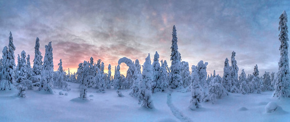 04 Jan 2011, Finland --- Landscape of snow-covered trees at sunset --- Image by © Sausse David/National Geographic Creative/Corbis