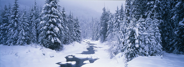 Unnamed mountain  creek and adjacent forest  after heavy snowfall , close to Athabasca Falls, south of Jasper , Jasper National Park, Alberta, Canada