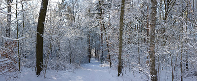 12400x5094, winter, snow, forest, trees, white, blue sky