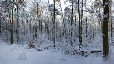 9618x5382, winter, snow, forest, trees