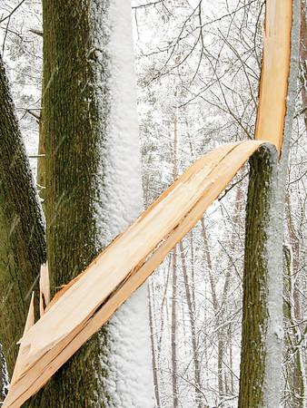 1920x2560, tree, brocken trunk, snow, white, winter