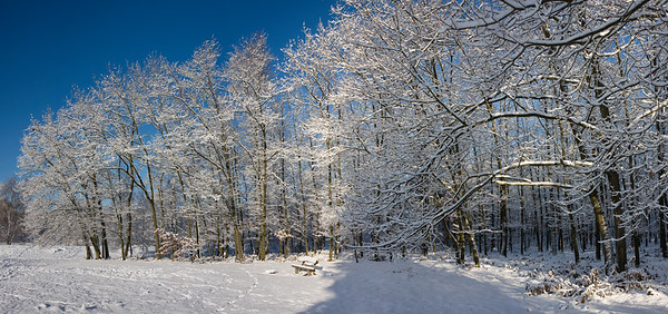 11029x5184, winter, snow, forest, trees, white, blue sky