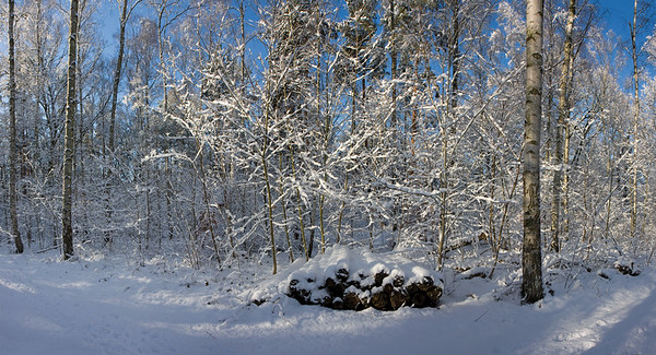 9561x5173, winter, snow, forest, trees, white, blue sky