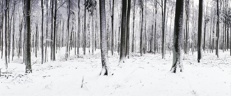 Winter Mecklenburg / Buchenwald