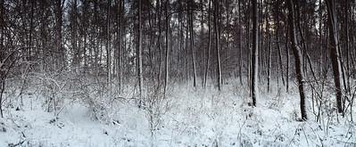 Winterwald Feldberg