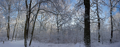 14761x5809, winter, snow, forest, trees, white, blue sky