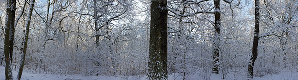 18100x4872, winter, snow, forest, trees, white, blue sky