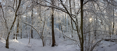 12028x5282, winter, snow, forest, trees, white, blue sky