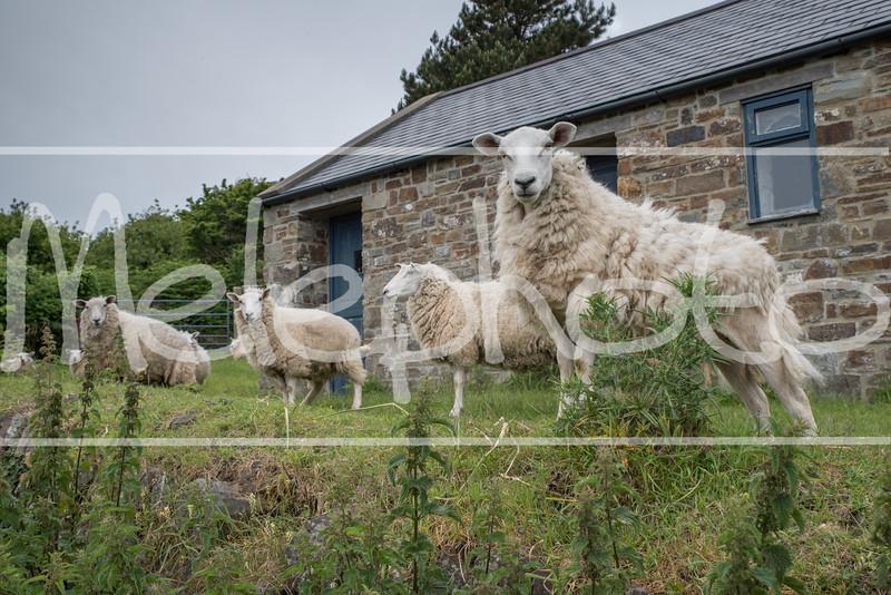 Wales 2017