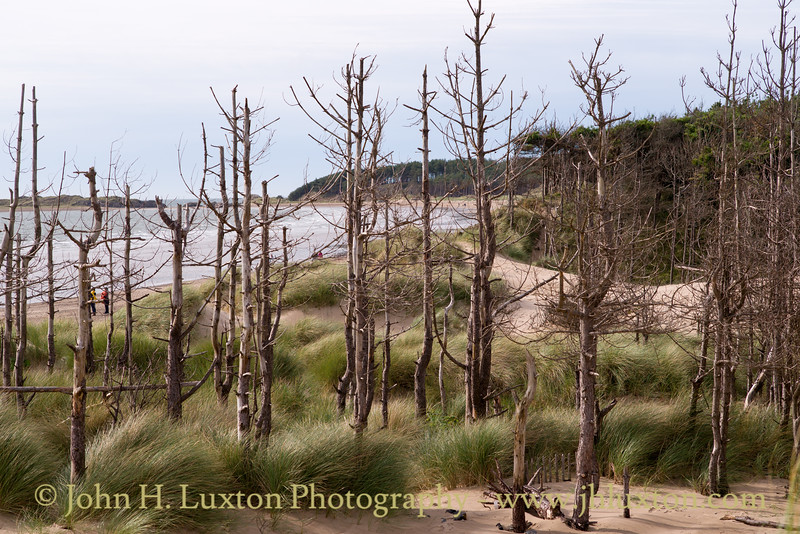 Newborough Nature Reserve - September 23, 2017
