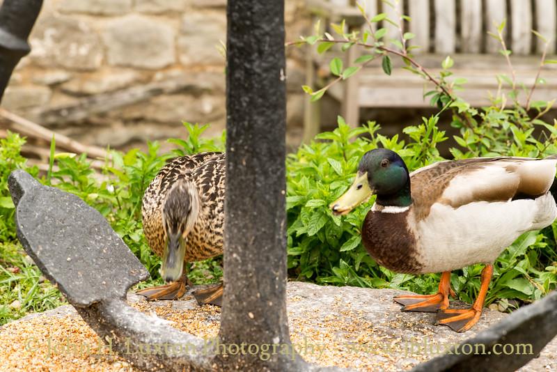 Tintern, Monmouthshire, Wales - May 29, 2017
