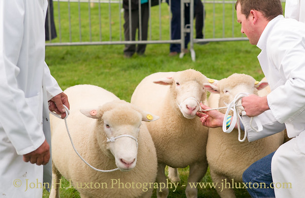 Pembrokeshire County Show - August 16, 2017
