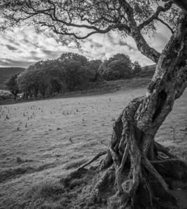 Wye Valley near Rhayader