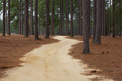At Pinehurst even the cart path is a challenge