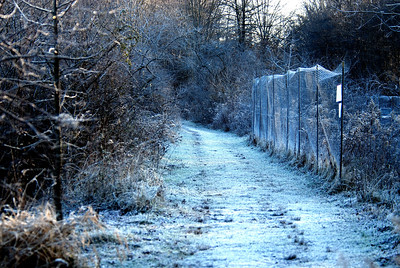 Trail with frost