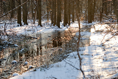 Jan 2009 Walk 19