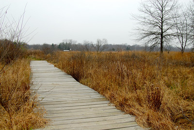 Meadow and boardwalk